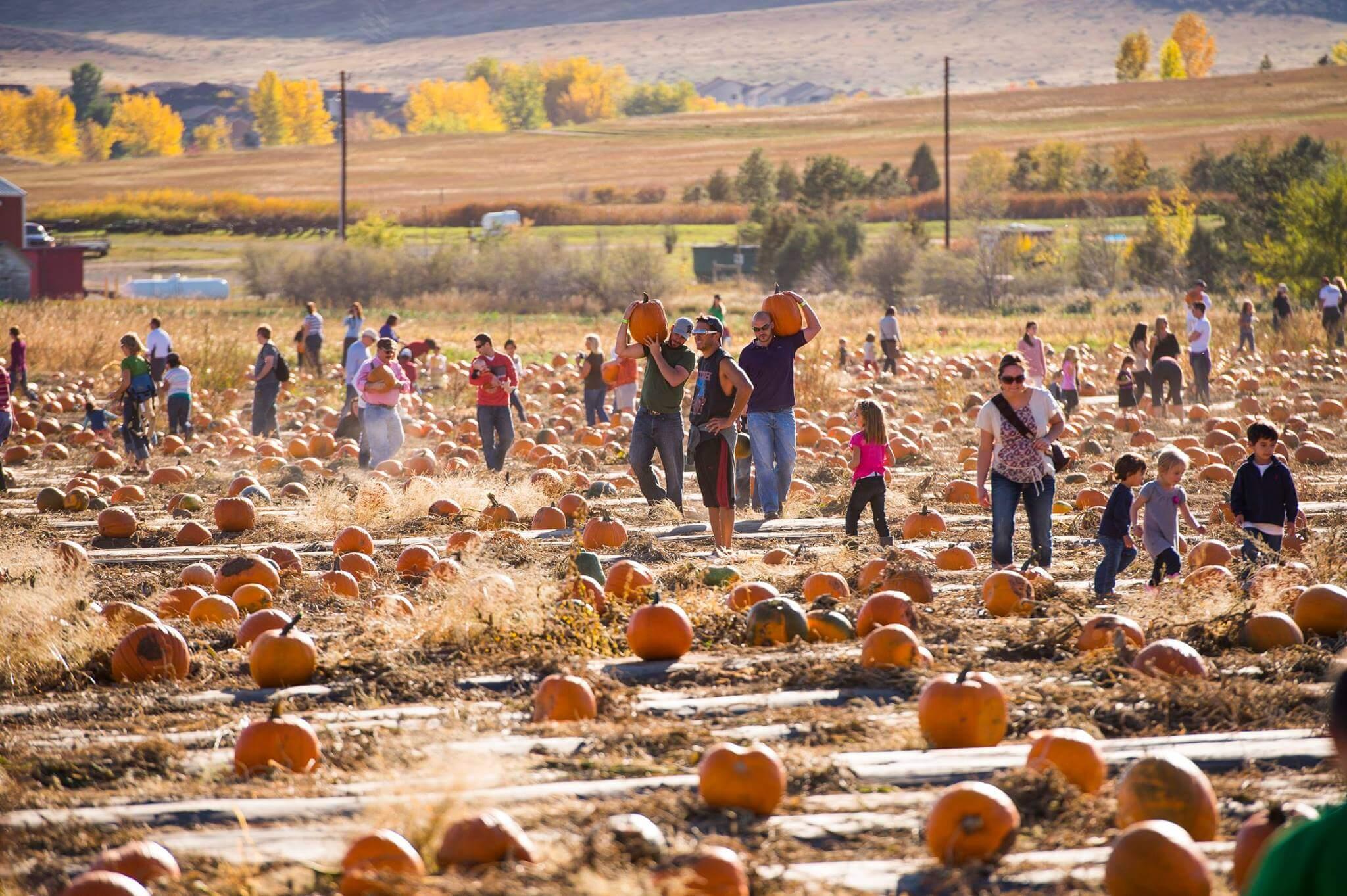 Pumpkin fest at the Denver Botanic Gardens